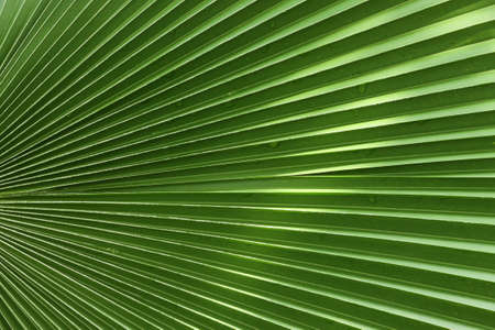 natures: Tropical leaf pattern - natures symmetry