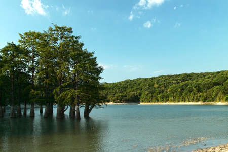 lake  pond  trees: mountain lake with cypress trees