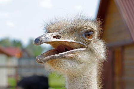 portrait of ostrich head