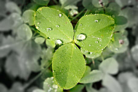 Clover with discolored and blurred background as environmental concept  Standard-Bild