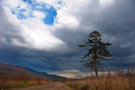 lonely pine tree on the road against a stormy sky  photo
