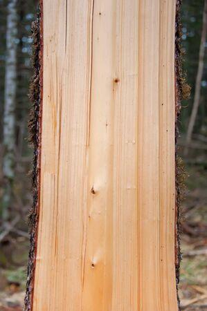wood log: Wood sawn cut vertically Stock Photo