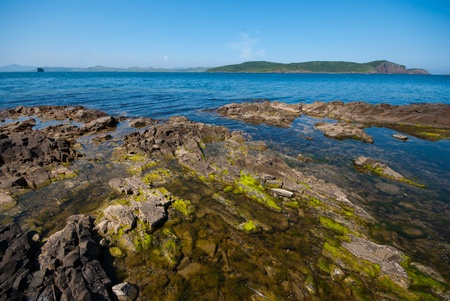 algas verdes: algas verdes en las rocas de la costa