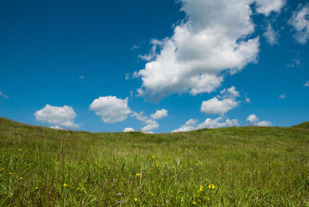 green meadow with flowers, fluffy clouds on a blue sky photo