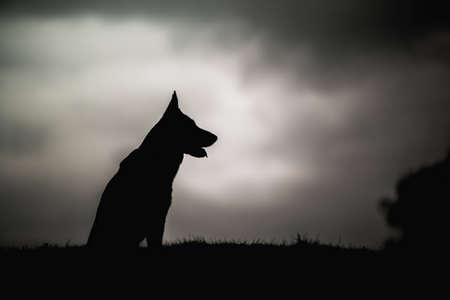 Silhouette shadow of a shepherd black and white photo