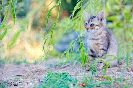 immobile: Kitten hiding in the foliage looks a small prey immobile and attentive