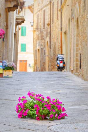 pienza: Flowers on the tarmac of Pienza, symbol environmental conflict