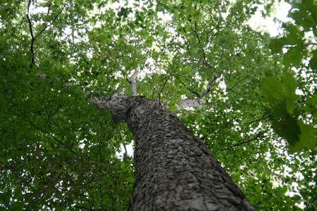 Tree horizontal frame