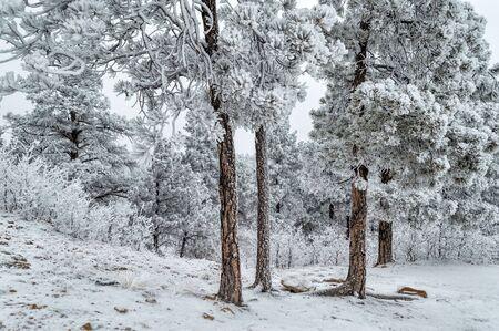 palmer: Winter landscape in Palmer Park, Colorado Springs, CO.