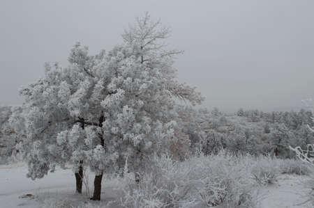 palmer: Winter landscape in Palmer Park, Colorado Springs,