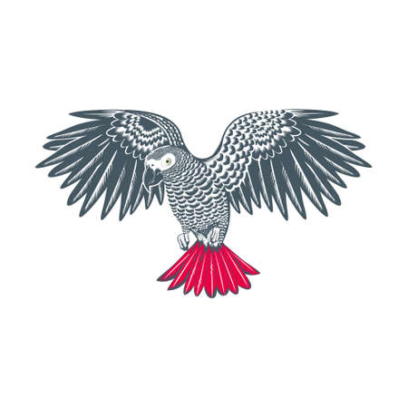 african grey parrot vector logo