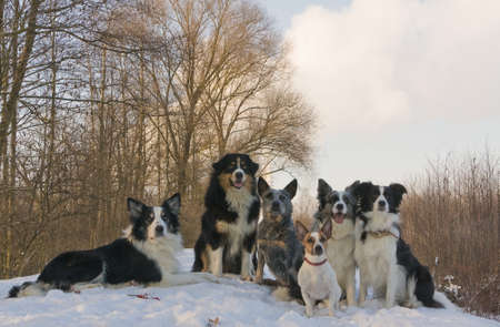 portrait of a group of dogs in the snow photo