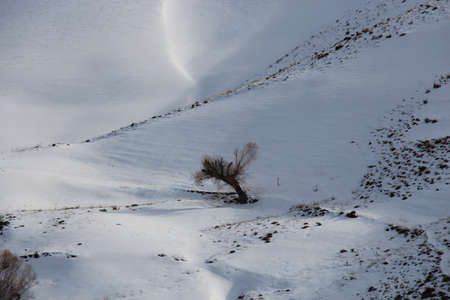 hillside: A lonely tree in the southern hillside of Alborz mountains.