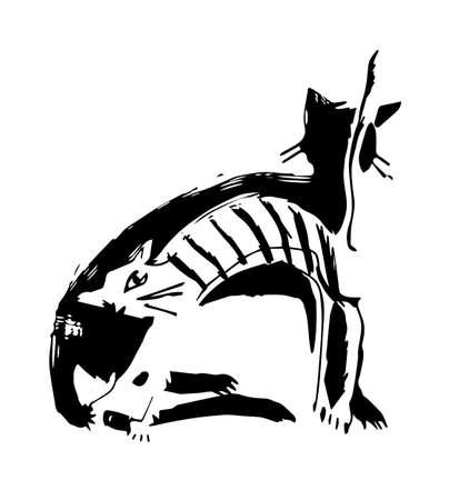 White cat, black-cat. Stock Photo