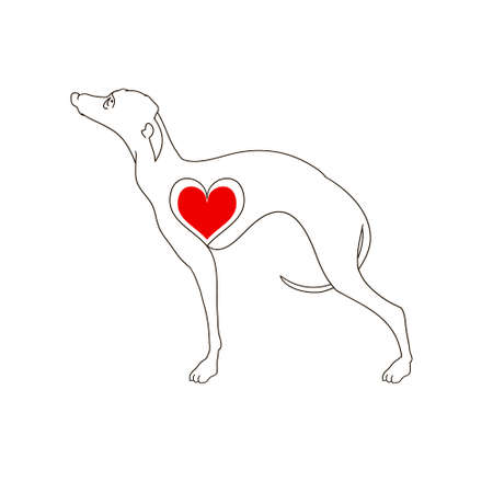 Dog breed Greyhound. Linear image. Tattoo dog with heart. Hand drawn vector illustration isolated on white, logo, t-shirt design