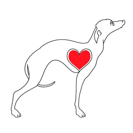 Greyhound. Vector illustrations drawn by hand. Original linear image of a dog with hearts.