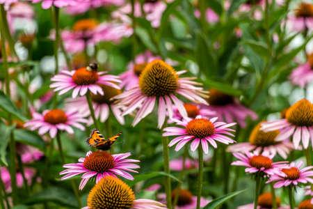 Fleurs, les abeilles et les papillons Banque d'images - 43543162