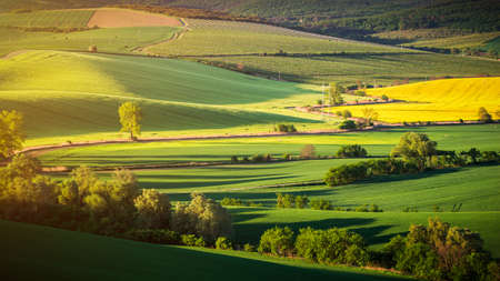 Endless Green Fields, Rolling Hills, Tractor Tracks, Spring Landscape under Blue Sky. South Moravia, Czech Republic