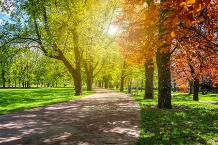 parc d & # 39 ; automne magique avec chemin de terre et fantastique paysage de conte de fées avec feuillage rouge