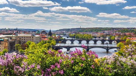 The blooming bush of lilac against Vltava river and Charles bridge, Prague Foto de archivo
