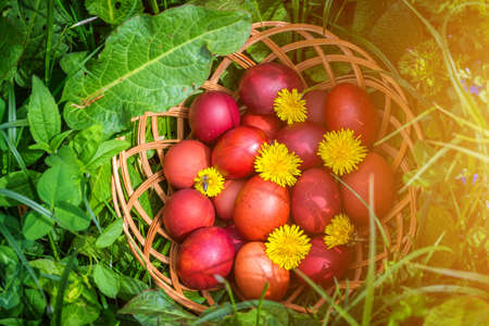 Red easter eggs on the grass with flowers and blowballs, naturally colored easter eggs with onion husks. Happy Easter, Christian religious holiday.