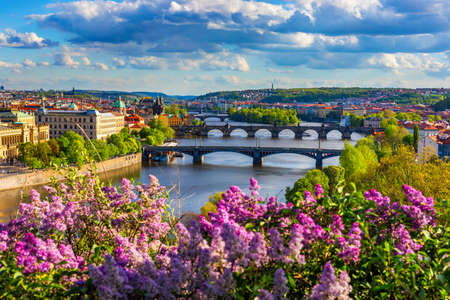 Amazing spring cityscape, Vltava river and old city center with colorful lilac blooming in Letna park, Prague, Czechia. Blooming bush of lilac against Vltava river and Charles bridge, Prague, Czechia.