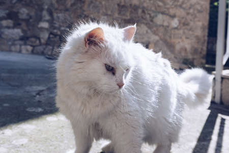 Cute cat washing itself on the street. Cat cleaning himself in the street, under the sun. He is against a nice old stone wall. Street cat being lazy. Cat sitting to clean himself on the wall.