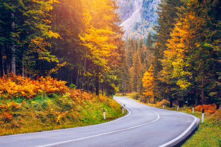 View of winding road. Asphalt roads in the Italian Alps in South Tyrol, during autumn season. Autumn scene with curved road and yellow larches from both sides in alp forest. Dolomite Alps. Italy Reklamní fotografie