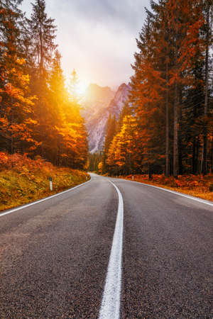 View of winding road. Asphalt roads in the Italian Alps in South Tyrol, during autumn season. Autumn scene with curved road and yellow larches from both sides in alp forest. Dolomite Alps. Italy Banque d'images - 137152944