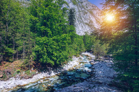 Cold mountain stream coming from Savica waterfall, river Sava near lake Bohinj, Slovenian Alps, Slovenia. The Sava Bohinjka is a headwater of the Sava River in northwestern Slovenia. Banque d'images - 138377188