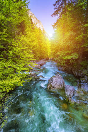 Beautiful colorful summer landscape with a stream and forest. The river in summer forest and the sun shining through the foliage. Summer nature landscape. Bohinj, Slovenia Banco de Imagens