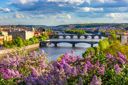 Amazing spring cityscape, Vltava river and old city center with colorful lilac blooming in Letna park, Prague, Czechia. Blooming bush of lilac against Vltava river and Charles bridge, Prague, Czechia. Banque d'images - 138378379