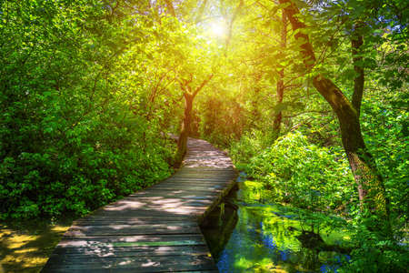 Krka national park wooden pathway in the deep green forest. Colorful summer scene of Krka National Park, Croatia, Europe. Wooden pathway trough the dense forest near Krka national park waterfalls. Фото со стока - 139275570