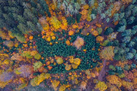 Aerial top down view of autumn forest with green and yellow trees. Mixed deciduous and coniferous forest. Autumn forest from above. Colorful forest aerial view. Scenic yellow trees in woodland. Banque d'images - 142068649