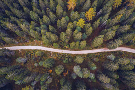 Scenic aerial view of a winding trekking path in a forest. Trekking path in the forest from above, drone view. Aerial top view of a trail in the middle of a forest. Aerial view of footpath in forest. Stock fotó
