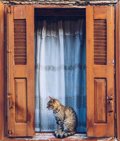 Cat resting on a windowsill in front of a open, aged wooden window with old open blinds painted in a typical Greek orange color. Window of whitewashed house and cat sitting between shutters. Stockfoto