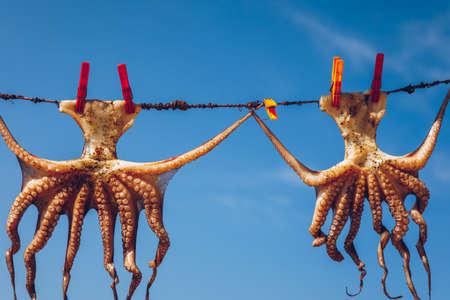 Octopus drying in the sun, Crete, Greece, Europe. Octopus drying in Crete, Greece. An octopus drying on a rope outside a tavern in Crete, Greece. Octopus is a very popular dish in Greece. Stock fotó - 145650110