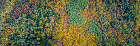 Aerial drone view over autumn forest. Colorful trees in the wood. Autumn forest aerial drone view. Autumn background, aerial drone view of beautiful forest landscape with autumn trees from above. Stockfoto