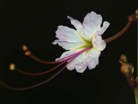 Wilde Blume Standard-Bild - 2163213