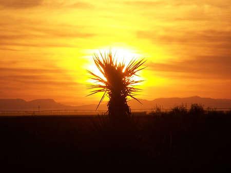 Yucca Plant  Standard-Bild - 2168231