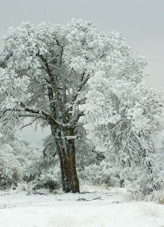 Winter-Schönheit Standard-Bild - 2229364