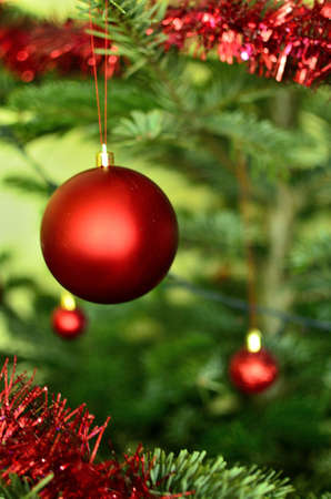 Red Christmas Bauble on The Christmas Tree