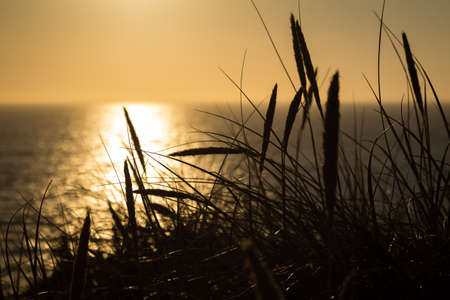 Lyme grass in silhouette against the sun setting over the sea