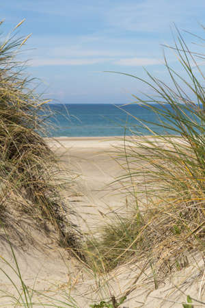 View over the sea from dunes covered in lyme grass