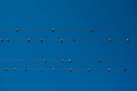 birds on a wire: Birds on the wire