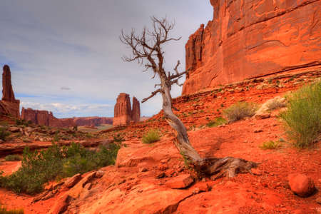 moab: A view in Arches National Monument near Moab, Utah with dead tree in foreground.