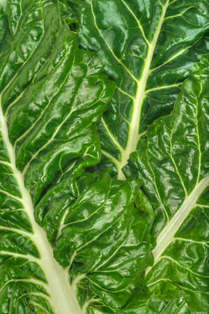 frame less: Swiss chard Beta vulgaris leaves full frame.  Chard is a leafy green vegetable often used in Mediterranean cooking.  Being more tolerant than spinich to hot, dry summer conditions and less inclined to bolt, it is often referred to as perpetual spinich or
