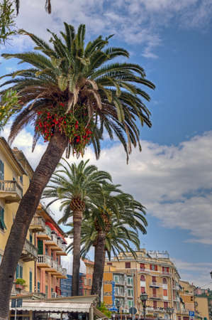 Liguria, Italy - 05172016 - Mediterranean palm trees with Epiphyllum or orchid cactus along an Italian street near the coast.