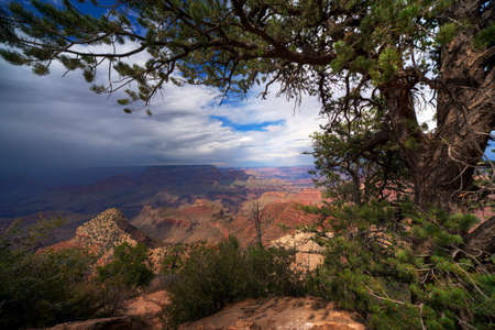 A scenic view of the Grand Canyon framed by a pine tree featuring clear skies and a passing rain storm.