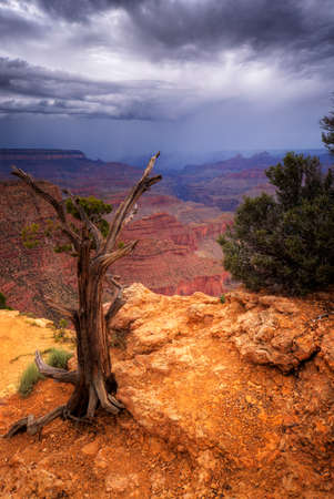 A dead tree stands on the south rim of the Grand Canyon with rain storm approaching. Vertical (portrait) format. Stock Photo
